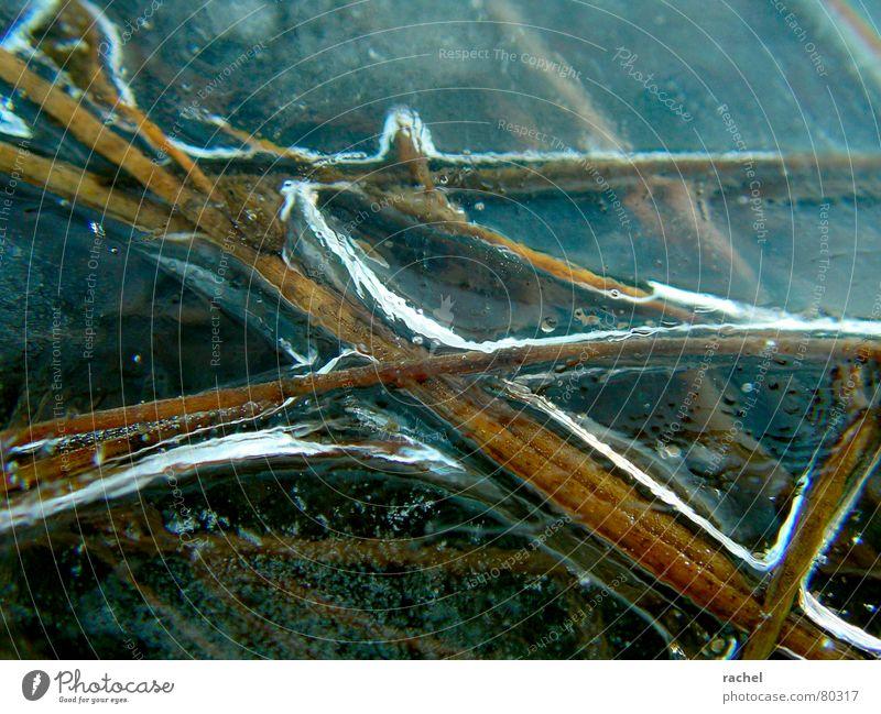 Im Eis gefangen Wasser Winter kalt Gras See Küste Frost Klarheit Stengel gefroren Halm durchsichtig stagnierend Dezember