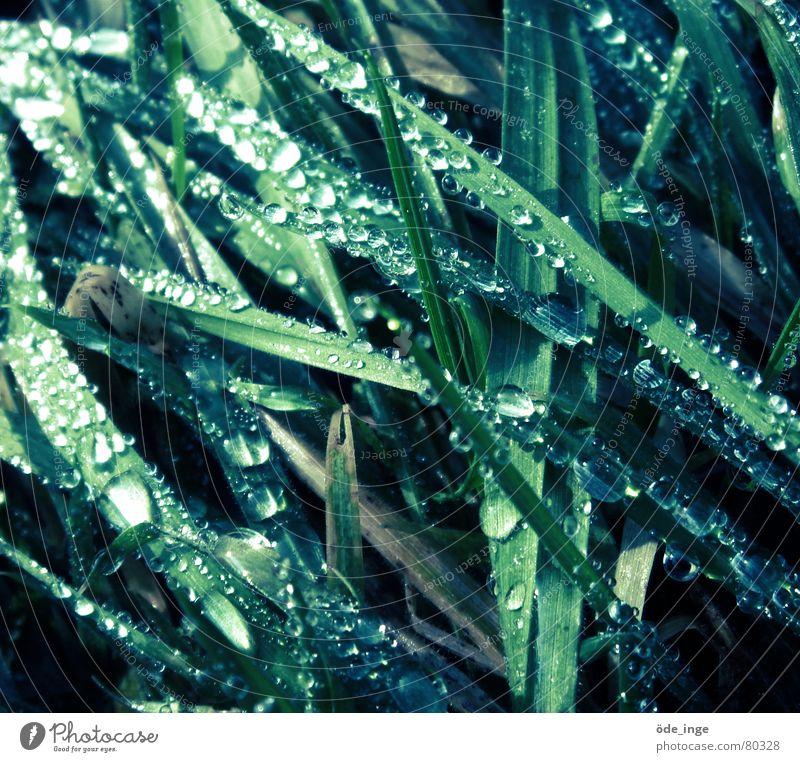 Einbildung Flüssigkeit Gras Wiese Pflanze Wachstum Wassertropfen Tau kalt Halm Winter durcheinander grün Grünfläche Stengel glänzend feucht nass liquide