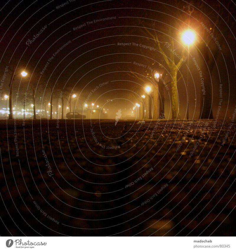 LONESOME ALLEY Natur Baum Stadt ruhig Einsamkeit Straße Lampe dunkel Herbst Wege & Pfade hell Angst Nebel trist Asphalt fallen