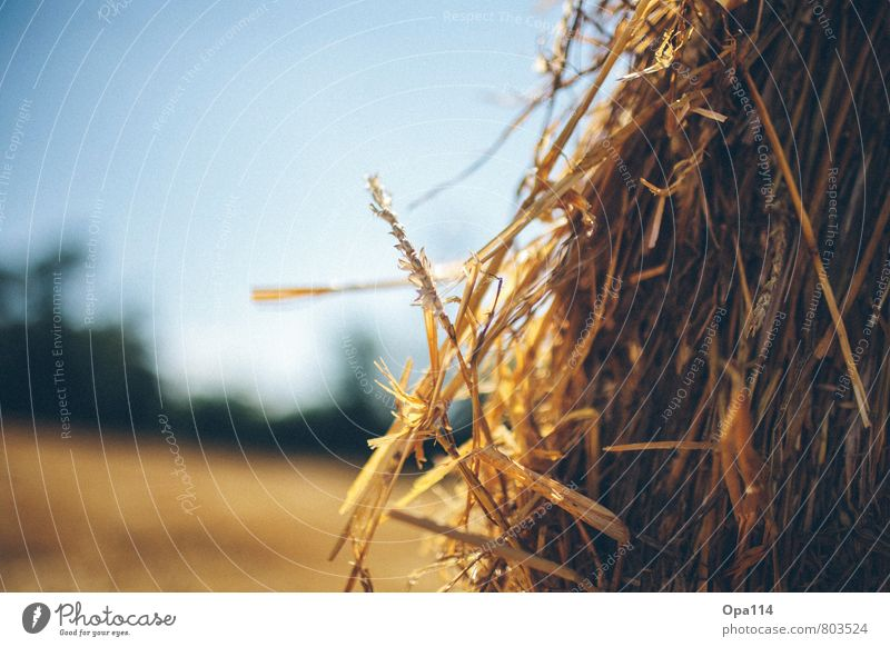 """Stroh Umwelt Natur Landschaft Sommer Schönes Wetter Pflanze Nutzpflanze Feld warten gelb gold """"Stroh Landwirtschaft Rundballen Ernte Agrar Ähre Weite Ferne"""""""