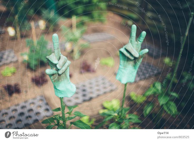 """Gartenfreude Umwelt Natur Pflanze Tier Arbeit & Erwerbstätigkeit grün Freude """"Handschuhe Gummi Finger Stinkefinger Gartenarbeit Pflanzen grüner Daumen"""" Farbfoto"""