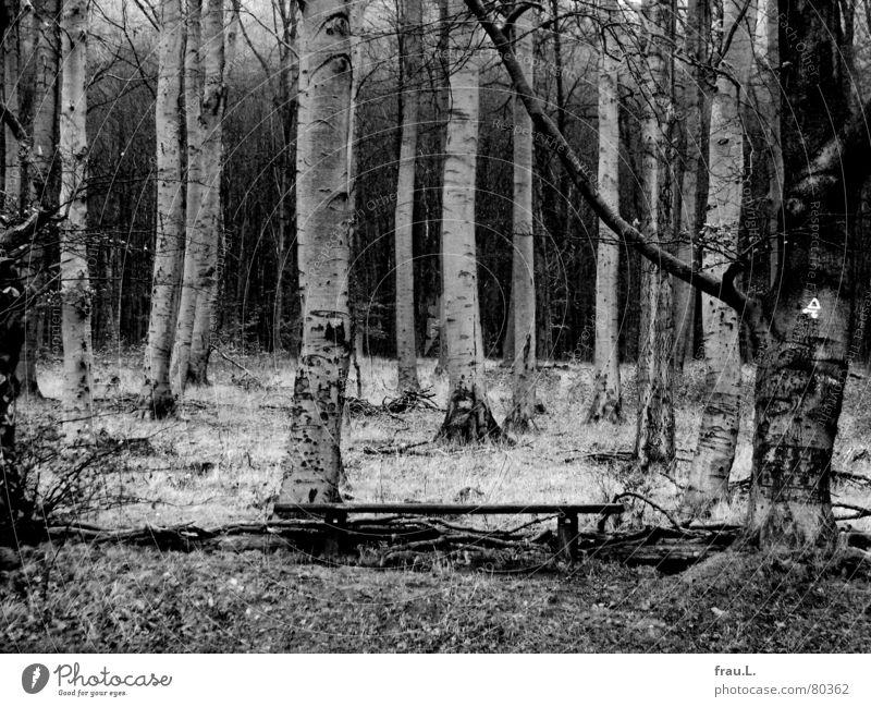Wald Baum ruhig Blatt Einsamkeit dunkel Gras wandern Bank Spaziergang Freizeit & Hobby gruselig Birke grauenvoll Buche Waldrand