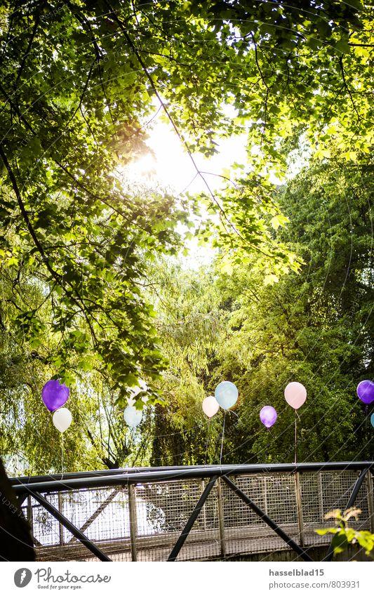 B.alone Baum Erholung ruhig Freude Leben Stil Glück Lifestyle Feste & Feiern Party Zufriedenheit Geburtstag Ausflug Brücke Abenteuer Luftballon