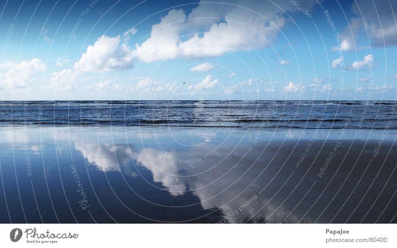 Die Möwe Jonathan Natur Wasser schön Himmel Sonne Meer blau Winter Strand Wolken Einsamkeit kalt Freiheit Eis Wellen Küste