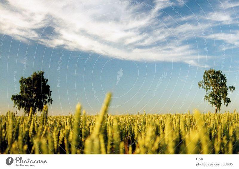 Sicherheitsabstand Natur Himmel Baum Sonne blau Sommer Wolken Feld Kitsch Ähren