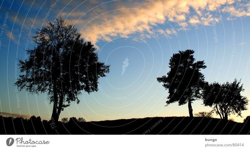 Trost Natur Himmel Baum ruhig Wolken Einsamkeit Leben dunkel Erholung Herbst träumen Landschaft orange Horizont Romantik Frieden