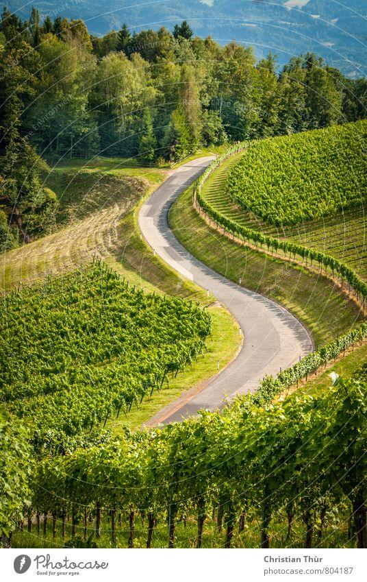 Weinstrasse (Südsteiermark) Natur Ferien & Urlaub & Reisen Pflanze grün schön Sommer Sonne Baum Erholung ruhig Umwelt Gras grau Freiheit Stimmung Tourismus
