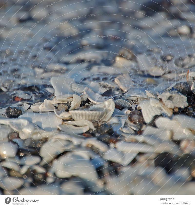 Muscheln Wasser Meer Strand Stein See Küste blasen gebrochen Schifffahrt Ostsee Luftblase Scherbe Kalk Miesmuschel Herzmuschel