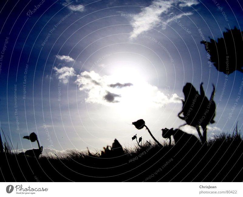 Titellos Himmel Natur Ferien & Urlaub & Reisen blau Pflanze schön Sonne Blume Wolken Ferne Umwelt Wärme Herbst Wind Romantik Duft
