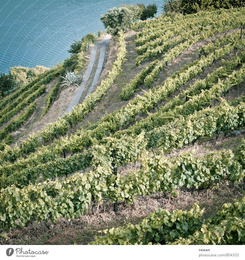 wein Landschaft Sommer Pflanze Nutzpflanze Garten Hügel Fluss Douro grün Wein Weinberg Berghang Weinbau Portwein Portugal Winzer Farbfoto Außenaufnahme Tag