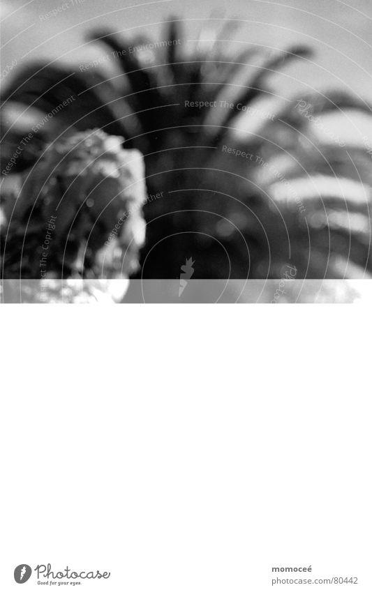 gelesen Schwarzweißfoto Gelassenheit Buch Palme ruhig genießen analog Printmedien Erholung Bett schweigen Sofa Meer schön La Palma Ferien & Urlaub & Reisen