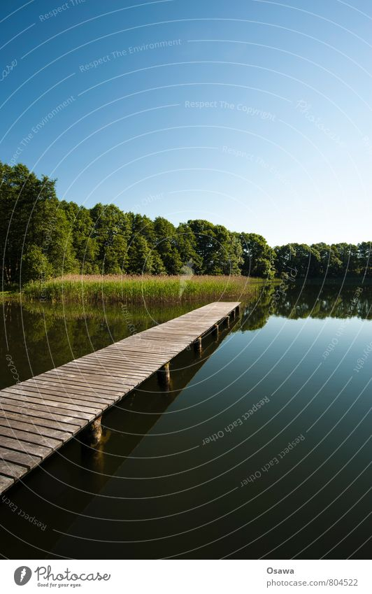 Steg Himmel Natur Ferien & Urlaub & Reisen Wasser Baum Erholung ruhig Holz Schwimmen & Baden See Ausflug