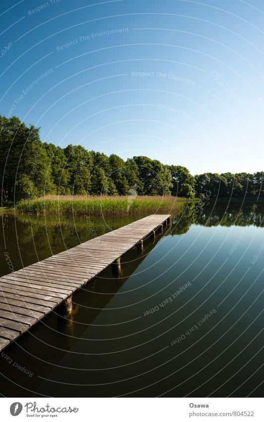 Steg See Wasser Holz Himmel Baum Natur Reflexion & Spiegelung Ferien & Urlaub & Reisen Erholung ruhig Schwimmen & Baden Ausflug Textfreiraum oben