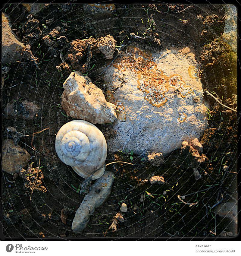 Schneckenhaus Natur Tier Wildtier 1 Stein alt authentisch retro Nostalgie Quadrat Rahmen gefiltert Rand gerahmt Boden Rückzug quadatisch Farbfoto Außenaufnahme
