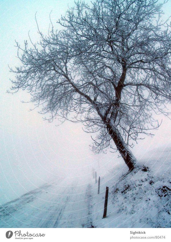 Der weiße Weg 1 Winter Baum Nebel kalt Schweiz Schnellzug Nebelschleier Baumstamm Fahrbahn Eis helvetia helvetien Schnee Wege & Pfade Straße snow white cold