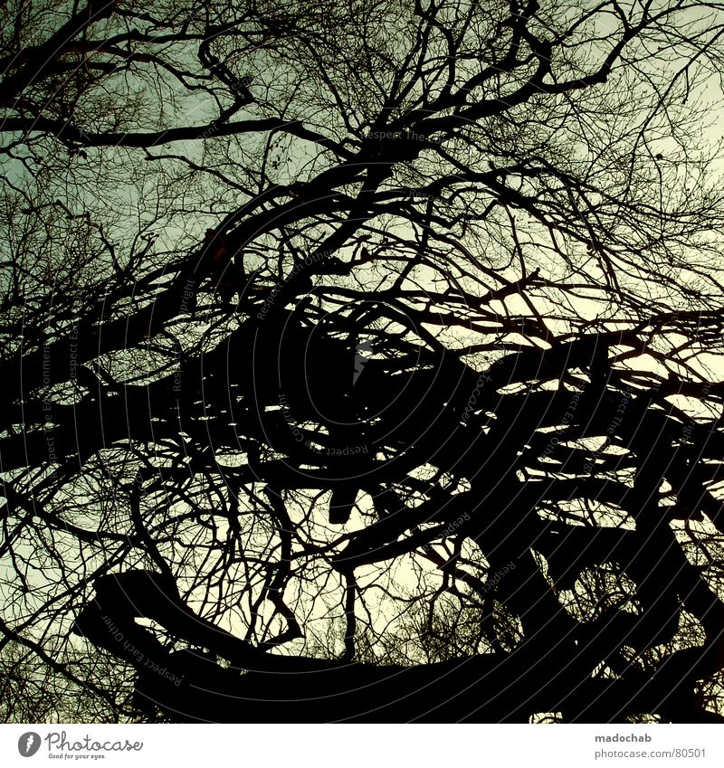 CHAOS IM KOPF Himmel Natur blau alt grün Baum Umwelt Herbst Linie Hintergrundbild Wachstum Sträucher Wandel & Veränderung Ast Niveau Lebewesen