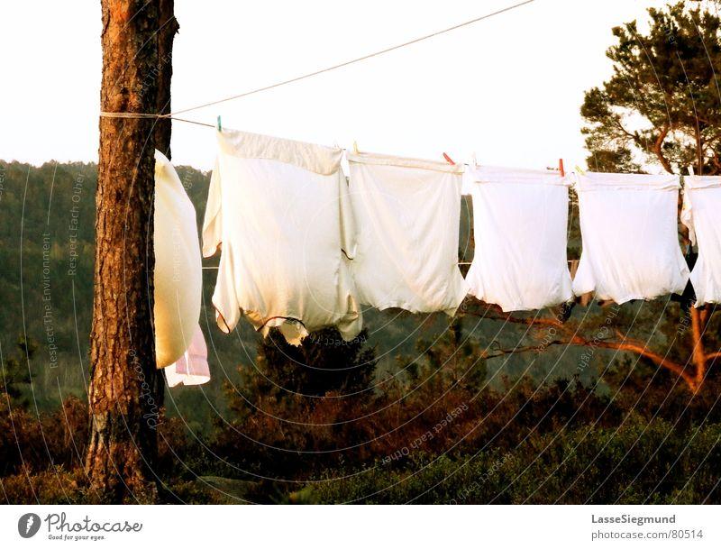 Wäscheleine Hemd Sommer Camping rot grün Norwegen trocknen Stoff T-Shirt Wildnis Bekleidung Häusliches Leben Wind Natur Kiefer Abenddämmerung Idylle