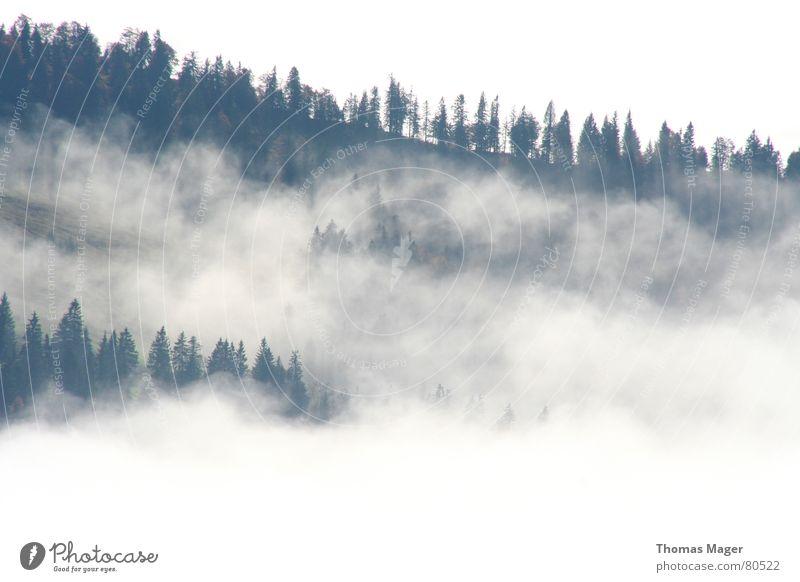 Eingenebelt Nebel Wald Ferne Wolken Baum leicht Hügel Nebelschleier Aussicht Nadelwald Berge u. Gebirge Blick Perspektive Niveau