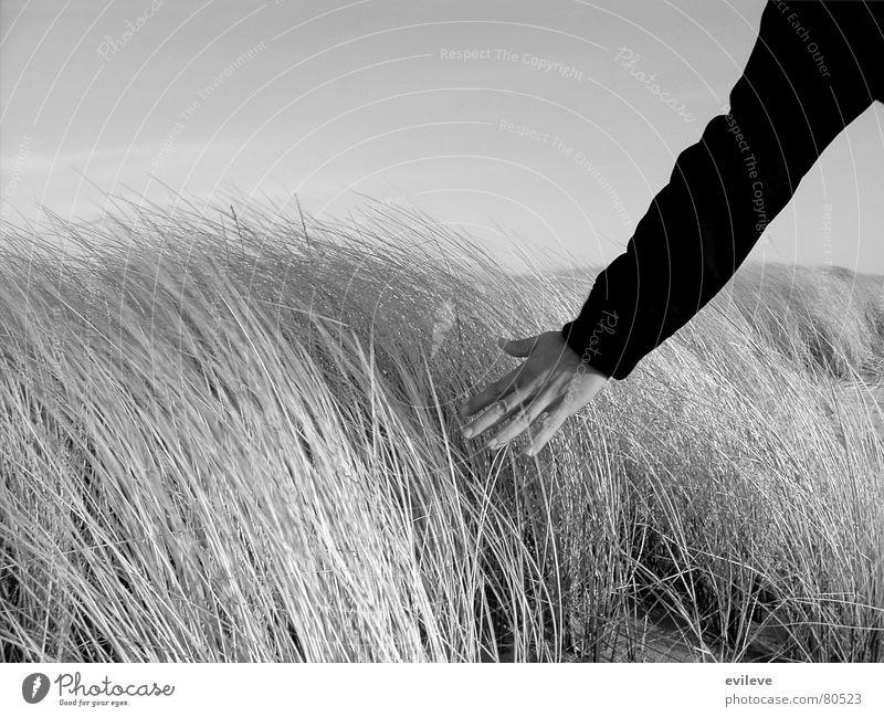 Grasstreicheln Mensch Hand Natur Himmel Ferien & Urlaub & Reisen ruhig Wiese träumen Wege & Pfade Landschaft Graffiti hell Umwelt gehen Arme
