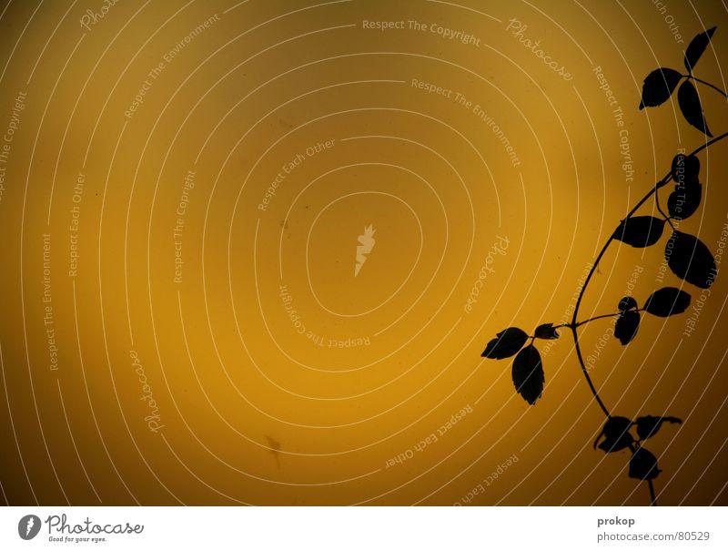 Ruhe vor dem Licht Natur Pflanze ruhig Blatt gelb Lampe schlafen Sicherheit Frieden Vertrauen Abschied Trennung schweigen Symbiose Pflanzenteile Leuchtkörper