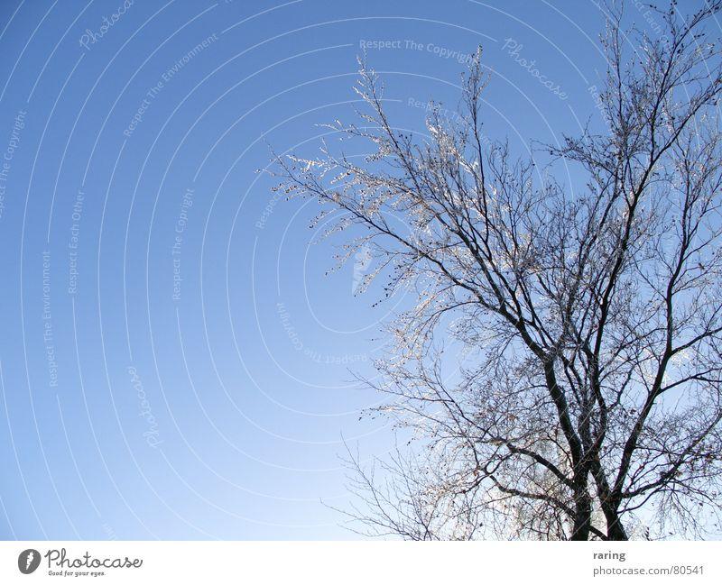 Schockgefrostet Natur Himmel Baum blau Winter Schnee Eis Frost Niveau