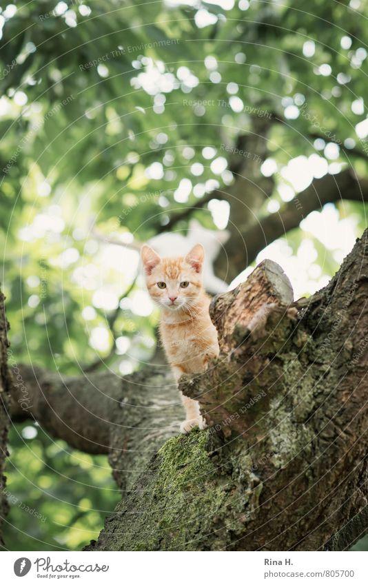 Kleines Sommer Baum Garten Tier Katze 1 Tierjunges beobachten sitzen niedlich Wachsamkeit Tigerfellmuster wach Farbfoto Gedeckte Farben Außenaufnahme