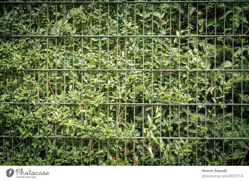 Busch und Metallzaun Natur Stadt Pflanze grün Sommer dunkel Umwelt Hintergrundbild Stimmung Ordnung Wachstum Sträucher authentisch einfach Sicherheit Zaun