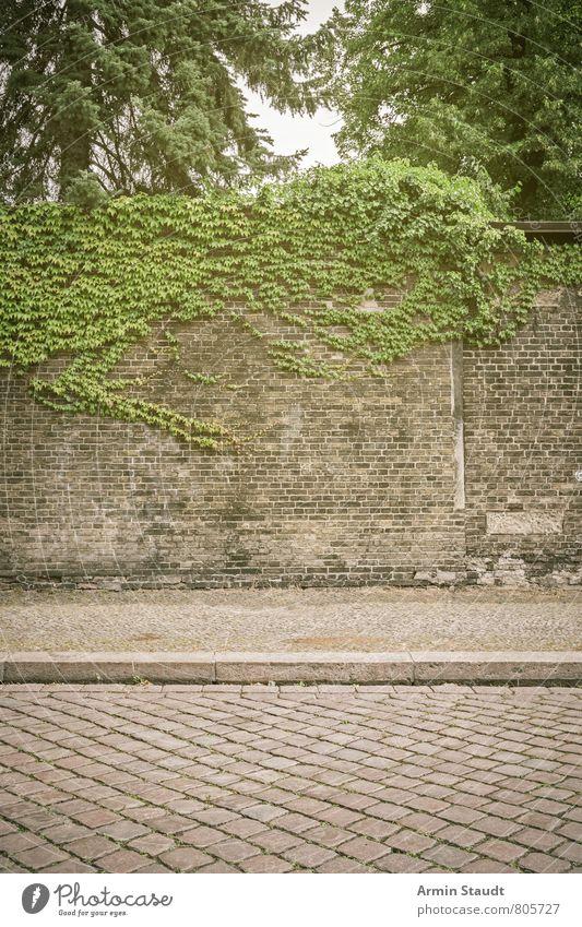 Straße, Bürgersteig, Mauer, Wein Sommer Natur Pflanze Himmel Baum Stadt Architektur Wand Backstein alt authentisch dreckig historisch kaputt Stimmung Romantik