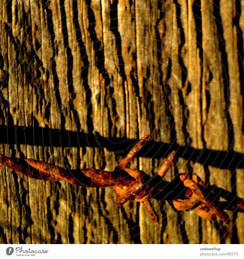grenzkonflikt braun gold Sicherheit gefährlich Grenze Rost Stacheldraht