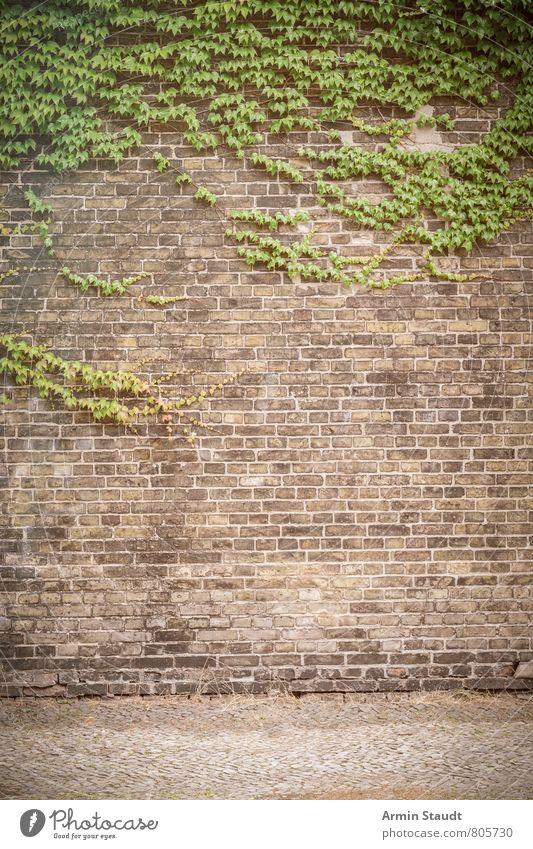 Russischer Wein und Backsteinmauer Sommer Himmel Pflanze Baum Wilder Wein Ranke bewachsen Stadt Architektur Mauer Wand Straße alt authentisch dreckig historisch