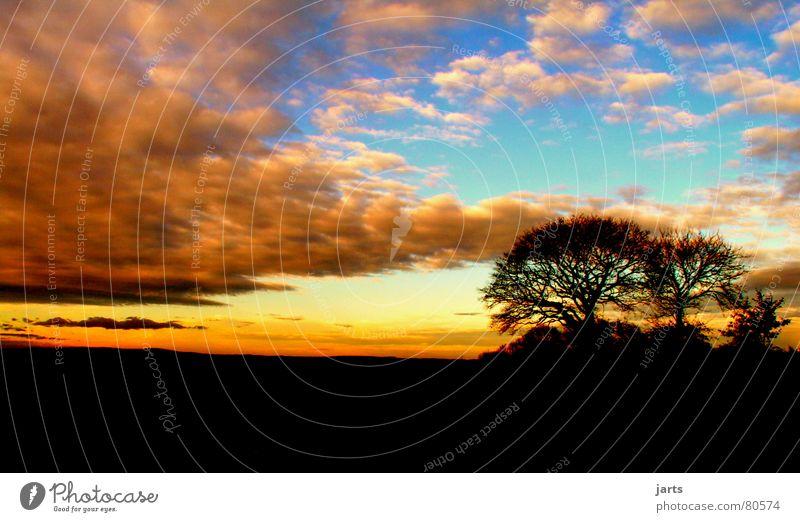 Melancholie schön Himmel Baum Wolken Traurigkeit Beginn Ende Sonnenuntergang