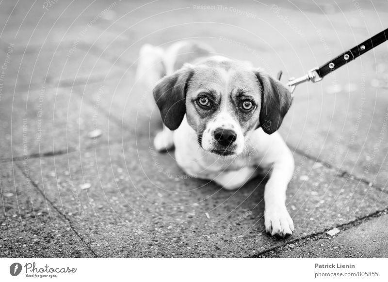 allein gelassen Hund Tier Traurigkeit Straße Auge Bewegung elegant Schutz Sehnsucht Vertrauen Appetit & Hunger Wachsamkeit Tiergesicht Müdigkeit Stress Verzweiflung