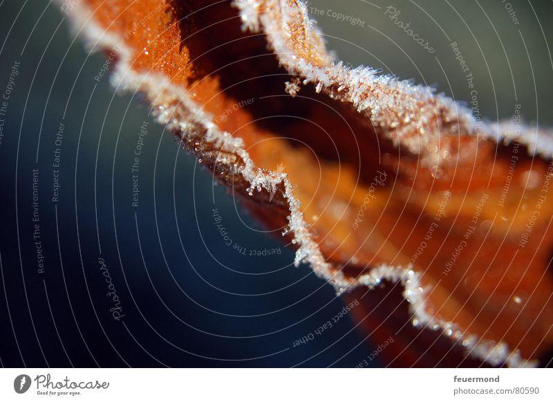 Kalt wars... (1) Herbst Winter kalt Eis Blatt Dezember tauen schmelzen braun Puderzucker Frost Schatten Schnee Raureif frieren blau Rost