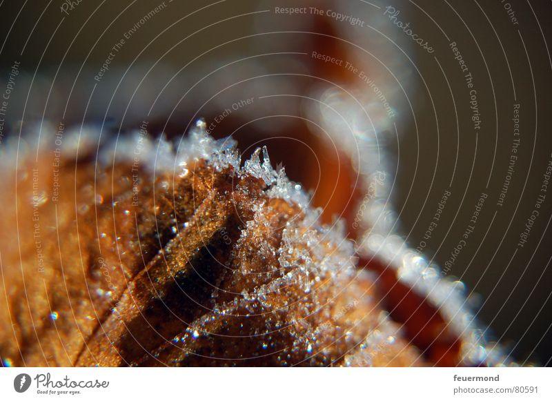 Kalt wars... (2) Herbst Winter kalt Eis Blatt Dezember tauen schmelzen braun Puderzucker Schnellzug Frost Schatten Schnee Raureif frieren blau Rost sun ripe