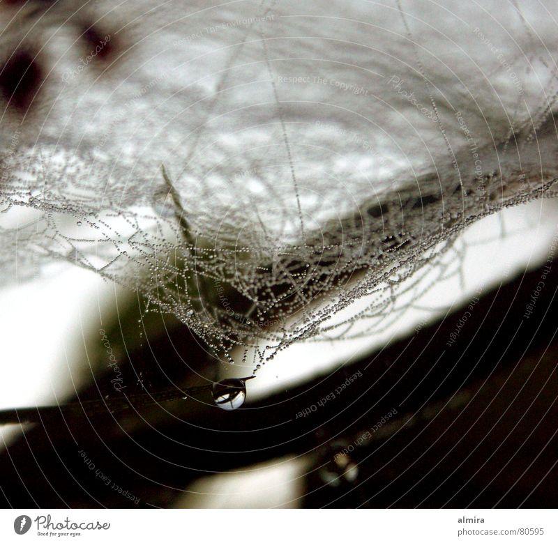 Spinnenwasser Spinnennetz Herbst dunkel Einsamkeit geheimnisvoll schön glänzend Unschärfe Trichter gefangen Wunder einzigartig klein winzig Perlenkette
