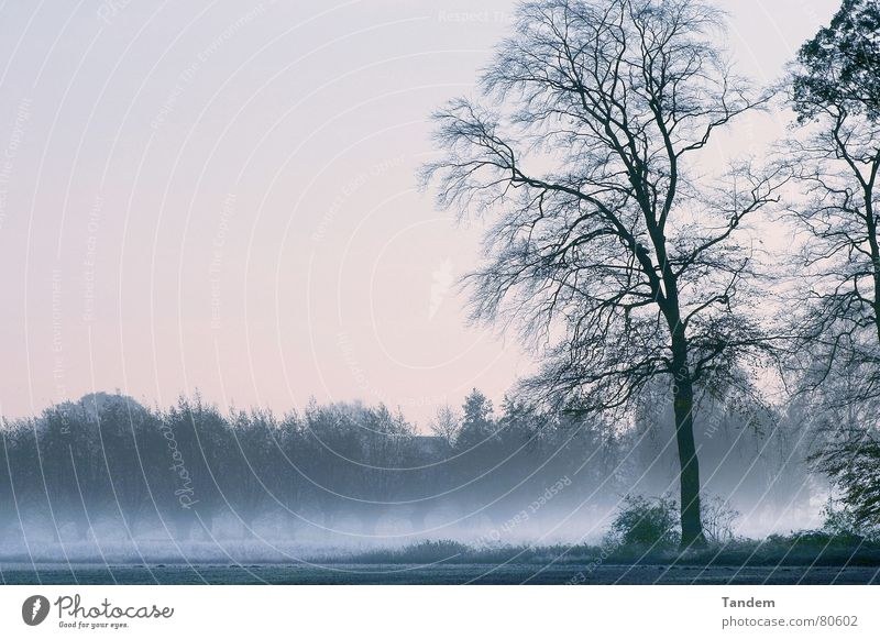 Cold Morning Winter tree graphic cold moody dusty fog morning Coolness blue silence clearness landscape Außenaufnahme