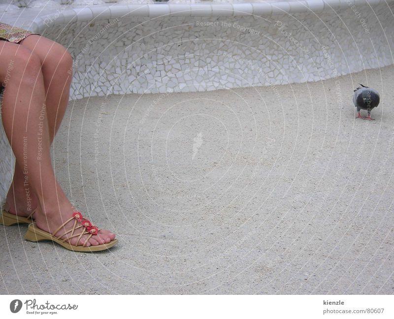 Fuß und Taube Frau Mensch Tier grau Schuhe Vogel Elektrizität Bodenbelag Konzentration Trennung Lücke