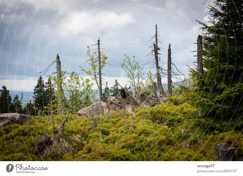 Waldlichtung Natur alt Pflanze grün Sommer Baum Landschaft Wolken dunkel natürlich grau Felsen wild Sträucher Hügel