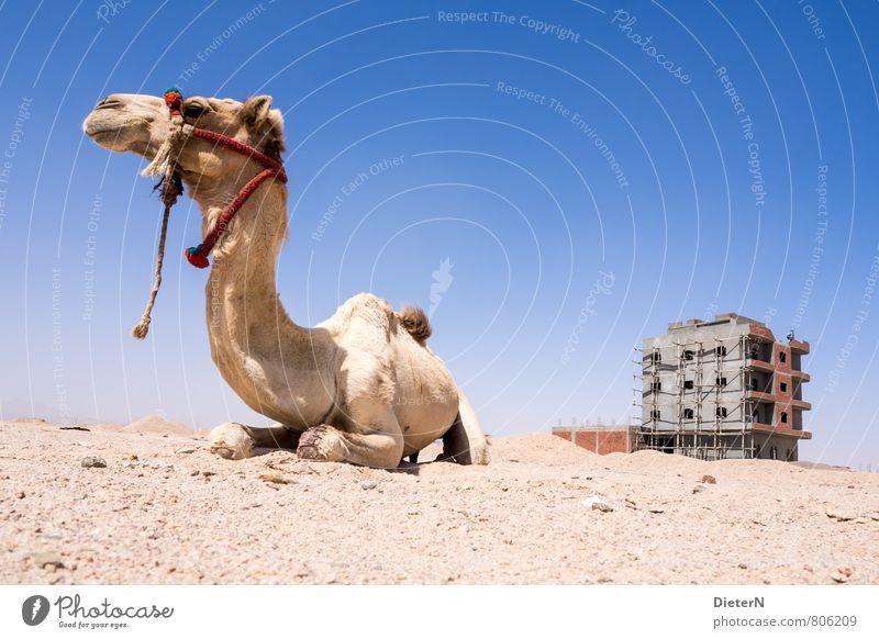 Wache Stadtrand Menschenleer Haus Gebäude Fassade Tier Nutztier 1 blau gelb grau rot Kamel Wüste steinig Gerüst Farbfoto Außenaufnahme Textfreiraum rechts