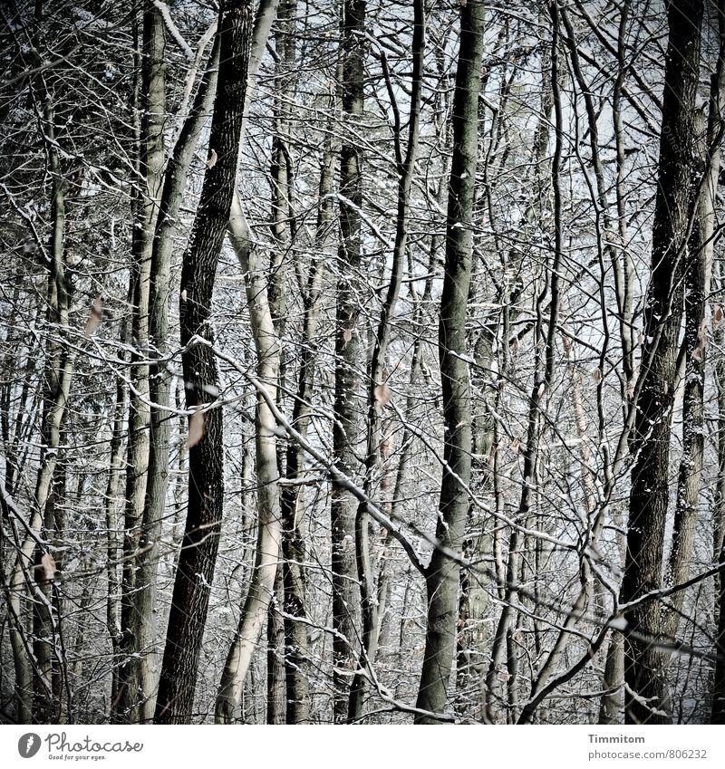 Enge. Natur Pflanze weiß Baum Blatt schwarz Winter Wald kalt Umwelt Gefühle natürlich grau Holz Schneefall Wetter
