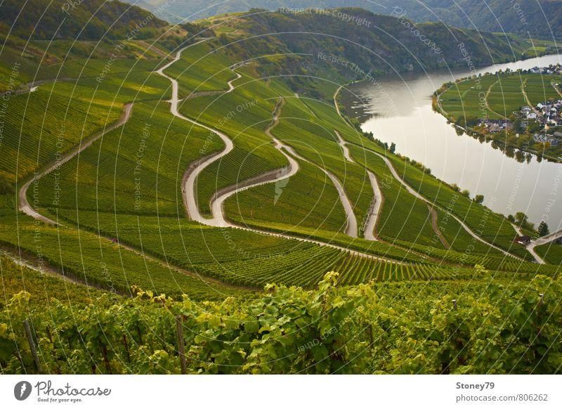 Mosel Landschaft Herbst Nutzpflanze Wein Fluss Weinberg Weinbau Mosel (Weinbaugebiet) Straße Wege & Pfade Wegkreuzung Kurve Serpentinen grün Farbfoto