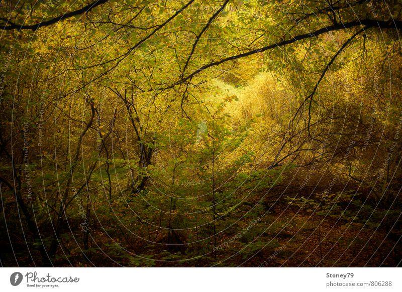 Herbstwald Natur grün Baum Landschaft Blatt dunkel Wald gelb natürlich braun Idylle wild Ast Abenteuer Laubbaum