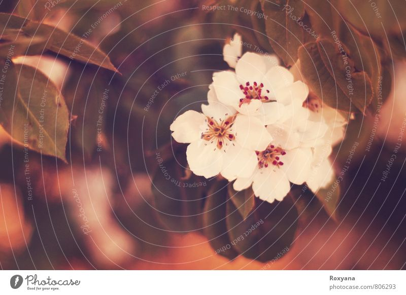 Blüte Natur Pflanze schön weiß rot ruhig Landschaft Umwelt Wärme Wiese Frühling klein Garten rosa Park