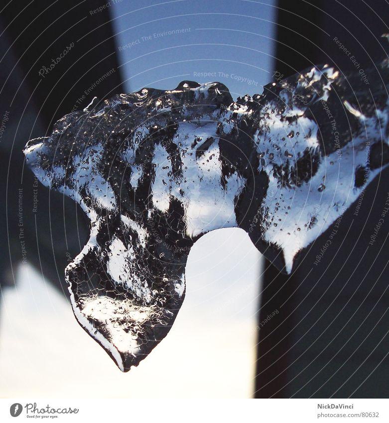 Eiswappen Wappen Januar Februar Tauwetter faszinierend gefroren Jenner Dachüberhang kalt durchsichtig Eiszeit Luftblase Winter November Dezember Glas
