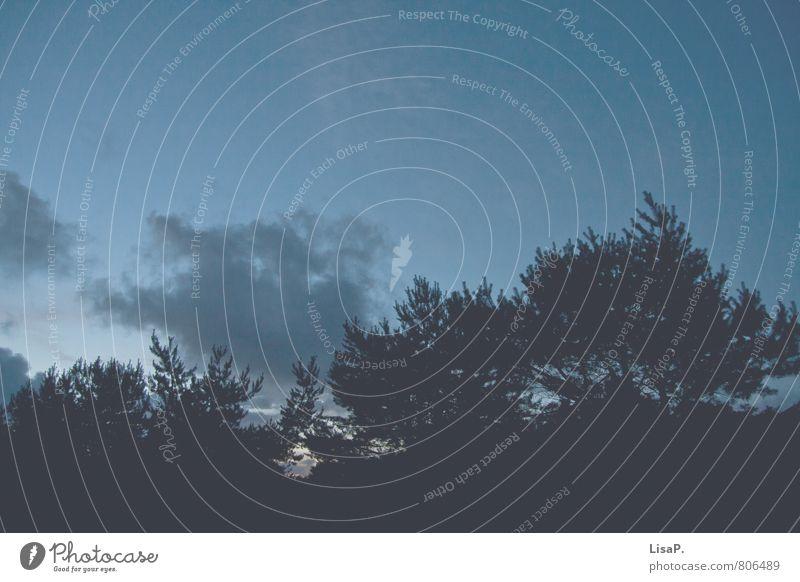 Mittsommer Himmel Natur Ferien & Urlaub & Reisen blau Pflanze Baum Einsamkeit Erholung Landschaft Wolken dunkel Umwelt natürlich Sträucher Abenteuer Romantik