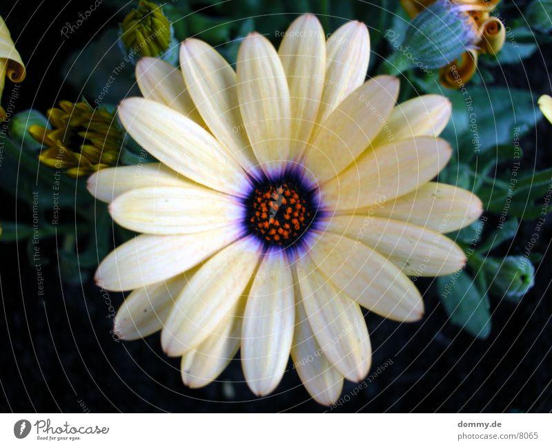 have a nice day Natur schön Blume grün gelb Farbe violett Duft Geruch