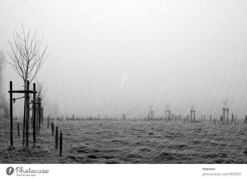 Nebelwiese Baum Winter kalt dunkel Wiese Herbst grau Feld nass Frost feucht Weide schemenhaft spukhaft ungemütlich