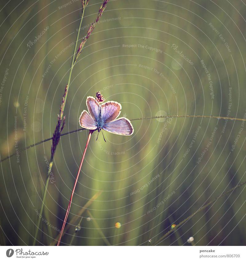 frühaufsteher Natur Pflanze Sommer Tier Gras Sträucher ästhetisch Urelemente Lebensfreude Schmetterling Leichtigkeit Grünpflanze Sumpf Wildpflanze Moor Bläulinge