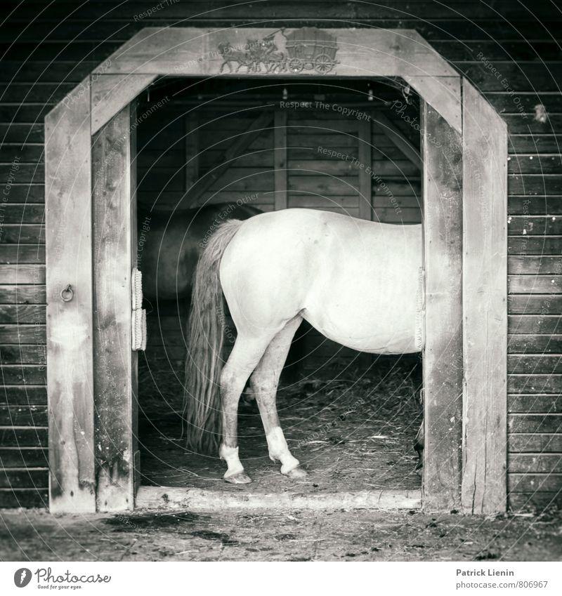 Pferd auf'm Flur Lifestyle schön Wellness Wohlgefühl Sinnesorgane Freizeit & Hobby Reiten Ferien & Urlaub & Reisen Ausflug Sommer Sport Umwelt Tier Nutztier 1