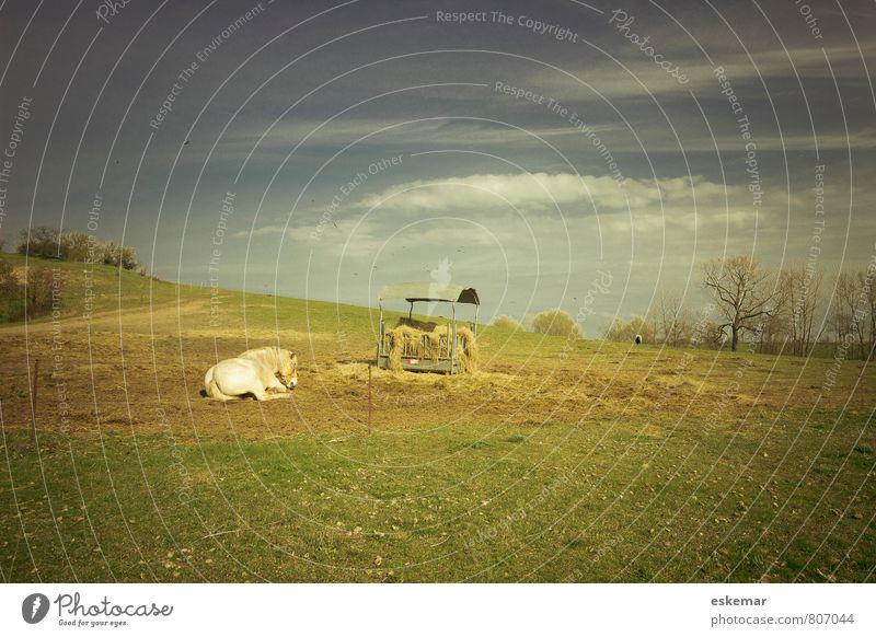 Hiddensee mit Pferd Natur Ferien & Urlaub & Reisen blau grün Erholung ruhig Landschaft Tier Wiese natürlich liegen Feld Idylle ästhetisch Insel retro